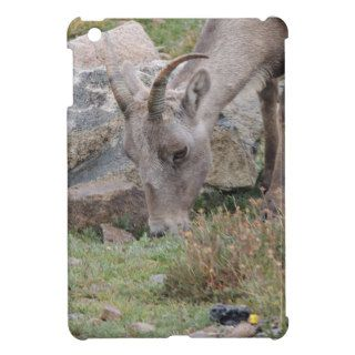 Rocky Mountain Big Horn Sheep Ewe Cover For The iPad Mini