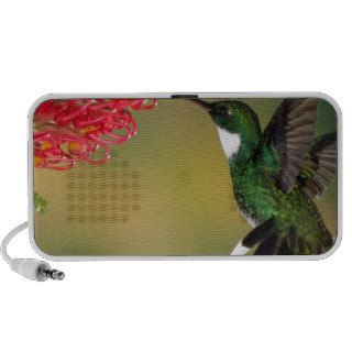 hummingbird 1 notebook speaker