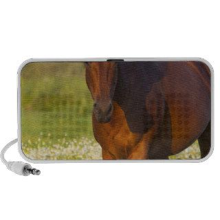 Horse in pasture near Pullman, Washington Laptop Speaker