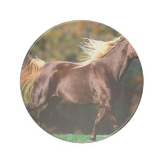 Horse Noble Locks Rocky Mountain Horse Coasters