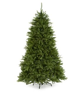 Dunhill Fir Full Unlit Christmas Tree   Christmas Trees