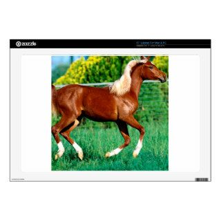 Horse Flames Flirt Arabian Yearling Decal For Laptop