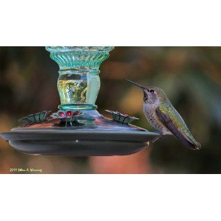 Perky Pet 8108 2 Green Antique Bottle 10 Ounce Glass Hummingbird Feeder  Wild Bird Feeders  Patio, Lawn & Garden
