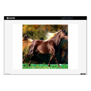 Horse Noble Locks Rocky Mountain Horse Laptop Decals